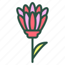 blossom, floral, flower, marigold, nature icon