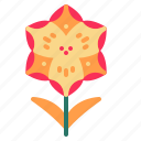 blossom, crocus, floral, flower, nature icon