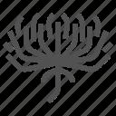 chrysanthemum, flower, garden, nature, spring icon