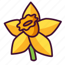 daffodil, floral, flowers, nature, plants icon