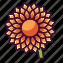 dahlia, floral, flowers, nature, plants icon