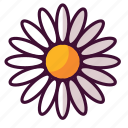daisies, floral, flowers, nature, plants icon