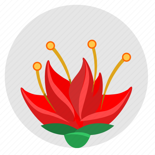 china, nature, plant, red, rose icon