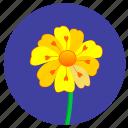flower, nature, plant, round, yellow