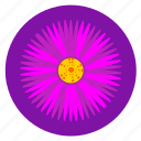 flower, pink, plant, violet icon