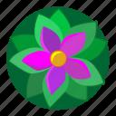 flower, green, nature, plant, violet