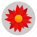 astra, flower, plant, red, rose icon