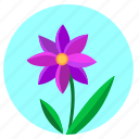 astra, flower, nature, plant, sky, violet icon