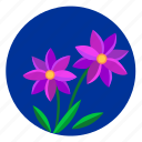 flower, night, plant, sky, violet icon
