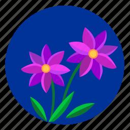 flower, night, plant, sky, violet icon