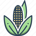agricultural, corn, maize, nutrition, popcorn, sweetcorn