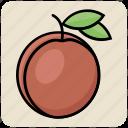 apricot, food, fruit, juicy, organic, plum, prune