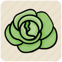 cabbage, food, lettuce, salad, vegetable icon