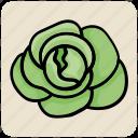 cabbage, food, lettuce, salad, vegetable