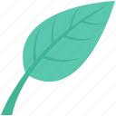 ecology, foliage, leaf, spinach, spinach leaf icon