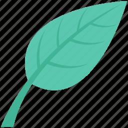 ecology, foliage, leaf, spinach, spinach leaf icon