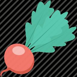 fodder radish, kohlrabi, radish, turnip, vegetable icon