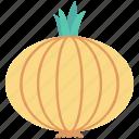 beetroot, bulb onion, common onion, onion, vegetable