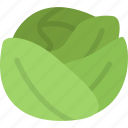 cabbage, cooking, food, fruit, kitchen, vegetable icon