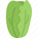 cabbage, cooking, food, fruit, vegetable icon