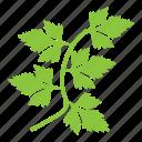 coriander, cooking ingredient, parsley, green coriander leaves, coriander leaves