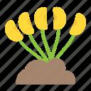 fruit gardening, growing fruit, kailyard, kitchen garden, potager icon