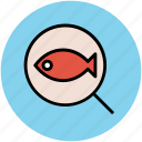 fish, healthy food, magnifier, searching fish, searching food icon