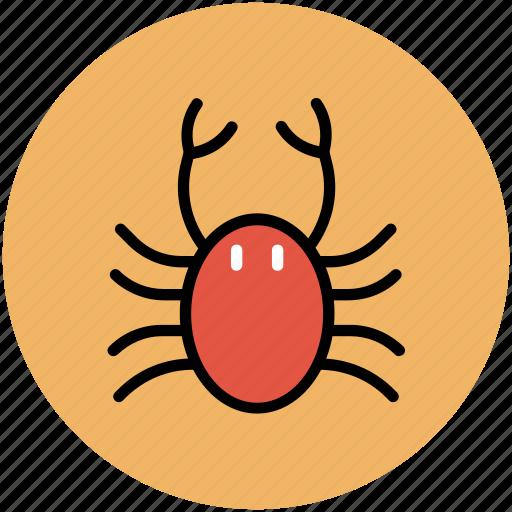 crab, food, healthy food, lobster, seafood icon