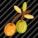 mediteranean, mediterranean, olive icon
