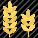 durum wheat, ear of wheat, grain, wheat, wheat ear icon