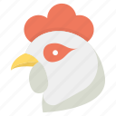 chick, chicken, chicken baby, poultry, rooster