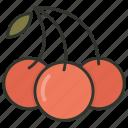 food, cherry, fruit, healthy food, stone fruit icon