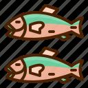 fish, animal, salmon