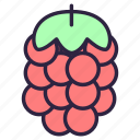 berry, food, fruit, healthy, raspberries, raspberry, razz icon