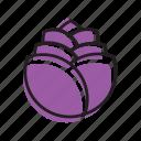 cabbage, food, fruit, purple, vegetable