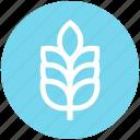 agriculture, cereal grain, farm, food, grain, grain ear, wheat
