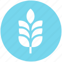 agriculture, cereal grain, farm, food, grain, grain ear, wheat icon