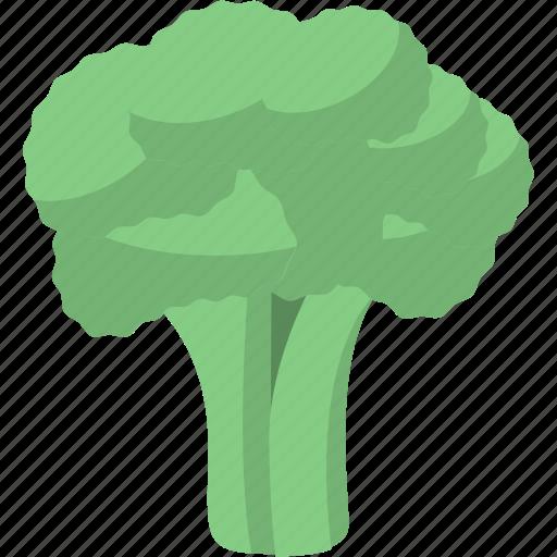 cauliflower, diet, vegetables, vegetarian icon