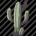 tree, nature, environment, natural, cactus, desert, tropical
