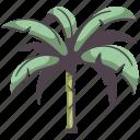 tree, nature, environment, palm, banana, tropical, leaf