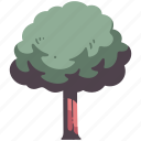 tree, nature, environment, wood, garden, natural, branch