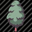 tree, nature, environment, wood, pine, garden, natural