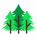 forestry, forrest, leaves, nature, pine, tree, trees icon
