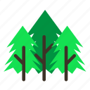 spikes, tree, pine, forestry, trees, forrest