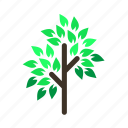 branch, forestry, forrest, leaves, spring, tree, trees