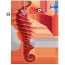 animal, fish, seahorse