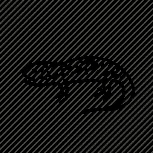 Salamander, animal, freshwater, lizard, nature, freshwater creature icon - Download on Iconfinder