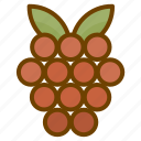food, fruit, health, raspberry icon