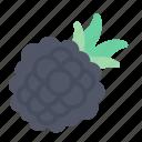 blackberry, fruit, food, juicy, tropical fruit