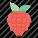 raspberry, fruit, food, juicy, tropical fruit